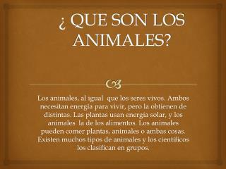 ¿ QUE SON LOS ANIMALES?