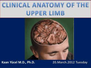 Clinical anatomy  of  the upper limb