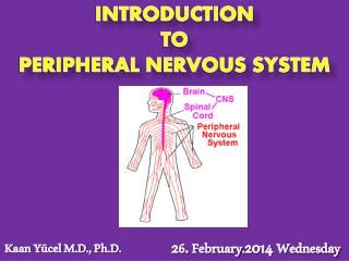 INTRODUCTION  TO  PERIPHERAL NERVOUS SYSTEM