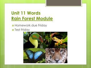 Unit  11  Words  Rain Forest Module