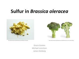 Sulfur in  Brassica oleracea