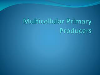 Multicellular  Primary Producers