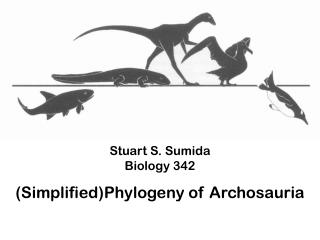 Stuart S. Sumida Biology 342 ( Simplified)Phylogeny of  Archosauria