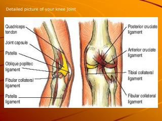 Detailed picture of your knee joint