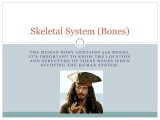 Skeletal System (Bones)