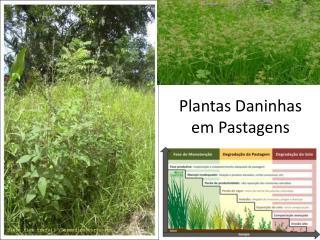 Plantas Daninhas em  Pastagens