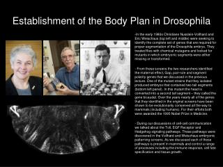 Establishment of the Body Plan in Drosophila