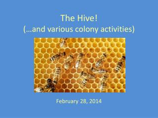 The Hive! (…and various colony activities)