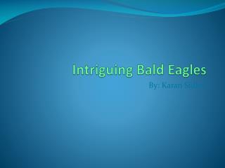 Intriguing Bald Eagles