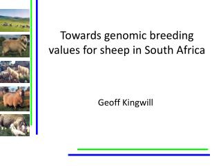 Towards genomic breeding values for sheep in South Africa