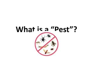 """What is a  """"Pest """"?"""
