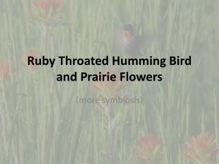 Ruby Throated Humming Bird and Prairie Flowers