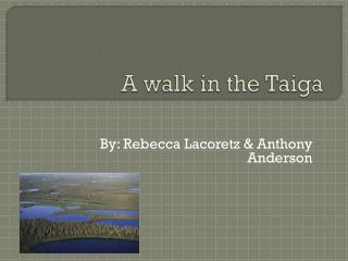 A walk in the Taiga