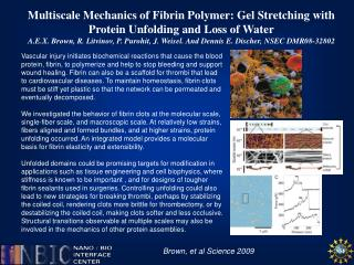 Multiscale  Mechanics of Fibrin Polymer: Gel Stretching with Protein Unfolding and Loss of Water
