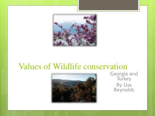 Values of Wildlife conservation