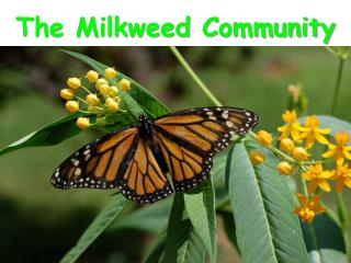The Milkweed Community