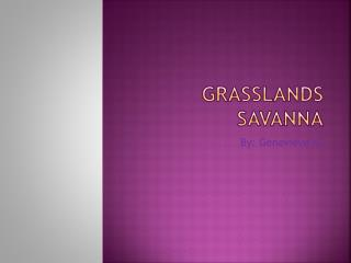 Grasslands Savanna
