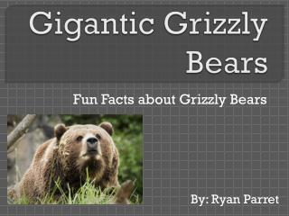 Gigantic Grizzly Bears