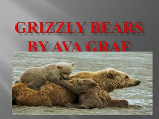 Grizzly bears By Ava Graf