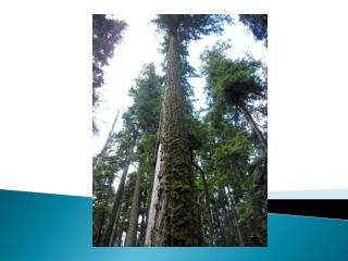 Managing a Hardwood forest for wildlife