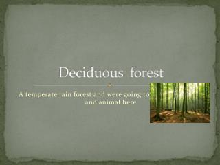 Deciduous  forest