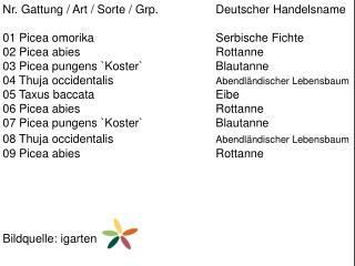 Nr. Gattung / Art / Sorte /  Grp .  Deutscher Handelsname 01  Picea omorika Serbische Fichte