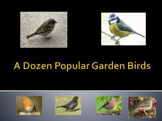 A Dozen Popular Garden Birds