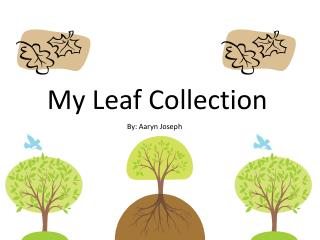 My Leaf Collection