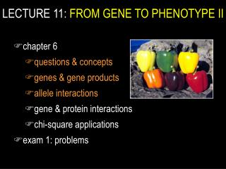 LECTURE 11: FROM GENE TO PHENOTYPE II
