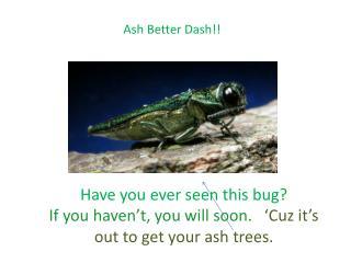 Ash Better Dash!!