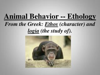 Animal Behavior -- Ethology From the Greek:  Ethos  (character) and  logia  (the study of).
