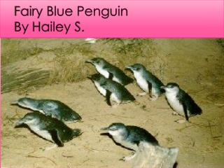 Fairy Blue Penguin By  Hailey  S.
