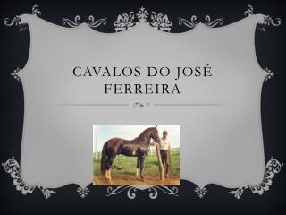 Cavalos do José  F erreira