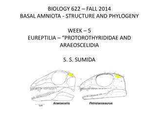 BIOLOGY 622 – FALL 2014 BASAL AMNIOTA - STRUCTURE AND PHYLOGENY WEEK –  5