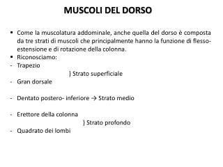 MUSCOLI DEL DORSO