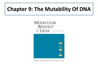 Chapter 9: The Mutability Of DNA