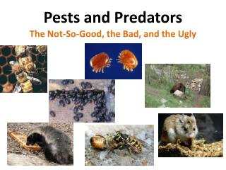 Pests and Predators