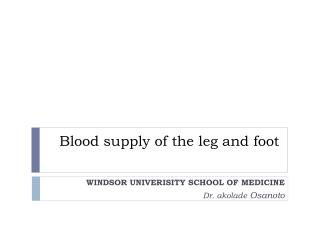 Blood supply of the leg and foot