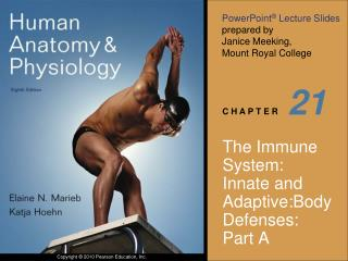 The Immune System: Innate and Adaptive:Body Defenses: Part A