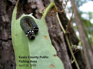 Evans County Public  Fishing Area April 18, 2009