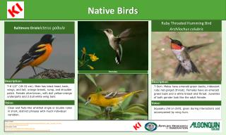 Native Birds