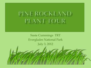 Pine Rockland  Plant  Tour