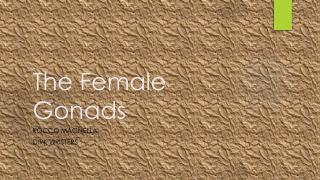The Female Gonads