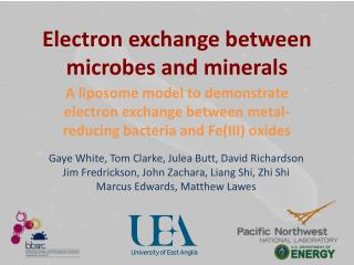 Electron exchange between microbes and minerals