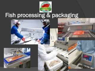 Fish processing & packaging