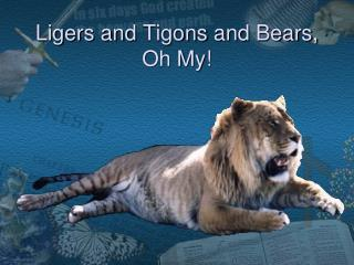 Ligers and  Tigons  and  Bears, Oh My!