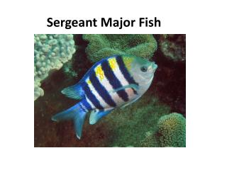 Sergeant Major Fish