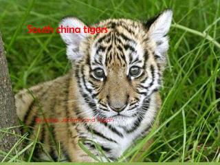 South china tigers