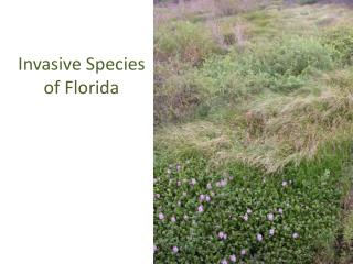 Invasive Species of Florida
