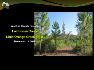 Alachua County Forever Lochloosa Creek Little Orange Creek Tract December 13, 2011
